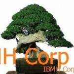 IBMH- Empezar negocios en China con buen pie. Cultivar el guanxí.